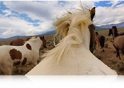 GOPRO HERO4 Black - Caméra sport photo de cheval